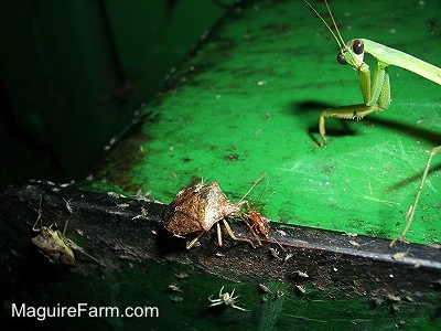 Stink Bug and Praying Mantis on a John Deere tractor
