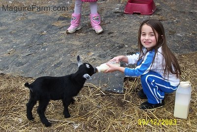 A little girl with long brown hair wearing blue and white is feeding a kid goat milk in a bottle. There is another girl in pink boots standing on a black tarp next to them. There is extra milk in a container sitting on the ground next to the child and a plastic maroon bowl in the distance.