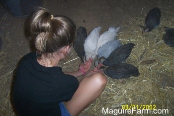 Six guinea fowl are eating out of the hands of a girl in a black shirt. There are Two guinea fowl in the background