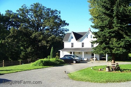 The side view of a white farm house with 2 cars in front of it. There is a cat walking across a blacktop driveway turn around
