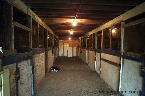 The Inside of a barn from the 1800s lined with stables. There is a black and white cat eating out of a food bowl