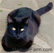 A shiny black cat is laying on a stone porch and looking up