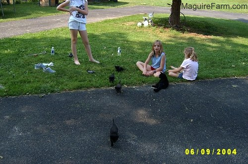 Three kids in a driveway surrounded by a bunch of kittens running around them.