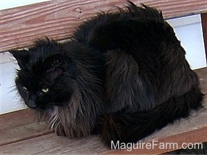 A Fluffy black cat is laying on a red wooden bench