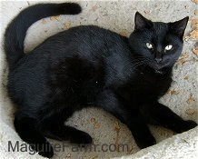 A black cat is laying on its side in front of a stone step