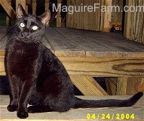 A black cat is sitting on a wooden playground