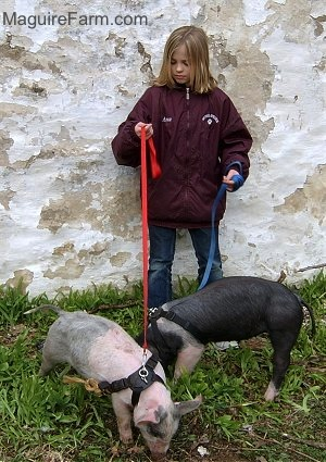 A blonde-haired girl is standing against a white stone wall holding the leashes of A Black with Pink pig and a gray and pink pig. The pigs are wearing black harnesses.
