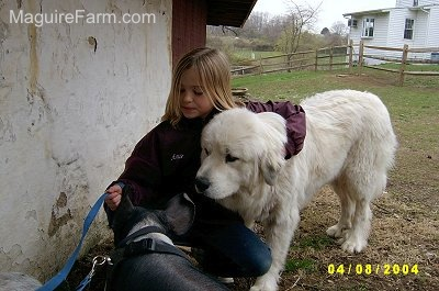 A blonde-haired girl is kneeling in front of a white stone barn wall with her arm around a large white Great Pyrenees dog. The black and pink pig is in front of them.