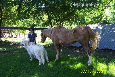 a blonde-haired girl wearing a backwards baseball cap is rubbing the back of a Great Pyrenees dog with a tan with white pony behind them. They are all in front of an old stone spring house under the shade of a tree.