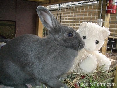 A grey rabbit is standing in front og a white teddy bear inside of a rabbit hutch.