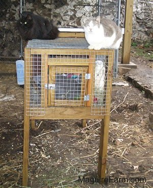 A longhaired black cat and a shorthaired grey and white cat are laying on top of a rabbit hutch with the grey rabbit in it