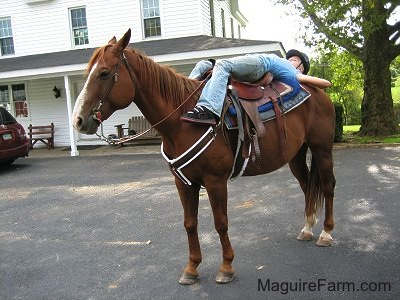 A tacked up brown and white horse is standing in a driveway in front of a white farm house with a wrap around porch. A blonde-haired girl wearing a blue shirt, blue jeans and a blue helmet is laying down across the back of the horse.