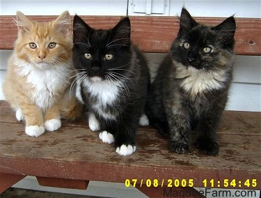 Three kittens lined up on a red wooden bench in on the porch of a white farm house. The first kitten is orange and white, the second is black and white and the third is calico.