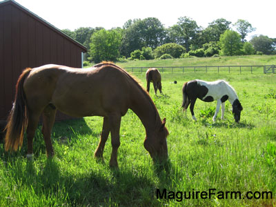 Three horses are eating grass out of a field. There is a lean-to barn to the left