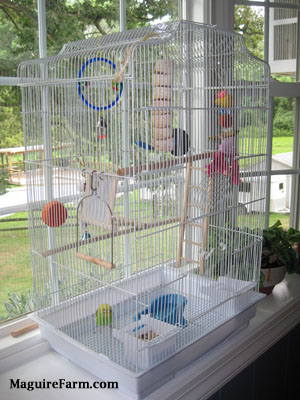 A green and yellow with black parakeet is standing at the bottom of a cage with feed in front of it next to a blue bathtub shaped water dish. There are plenty of things for it to climb onto inside of the cage.