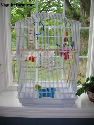 A cage in a white bay window filled with things for a parakeet to play with and climb on. A green and yellow with black parakeet is standing at the bottom of the cage