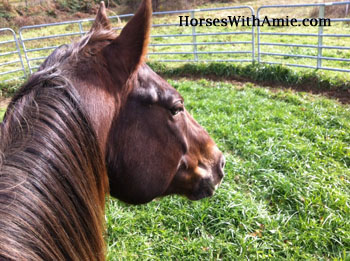 Close up - The mane and head of a brown horse who is inside of a round pen in a grassy field
