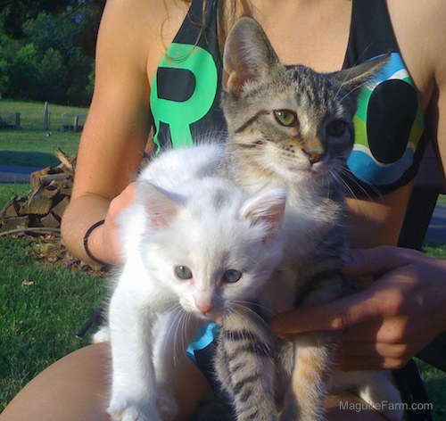 A white kitten and a tiger kitten being held by a girl outside in a grassy area